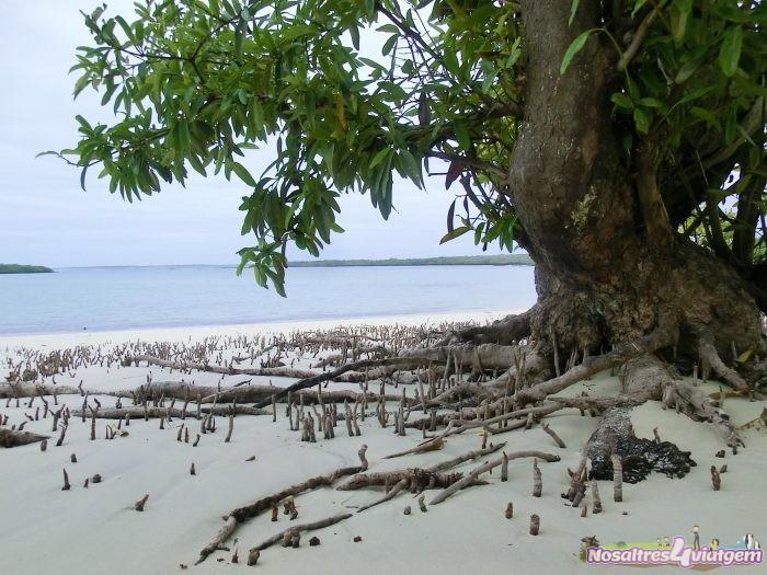 Entre manglares en Tortuga Bay, Isla Isabela (2013)