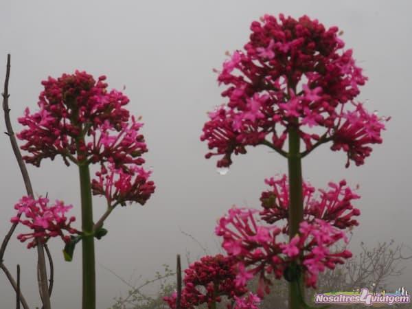 ESPAÑA Alicante flora
